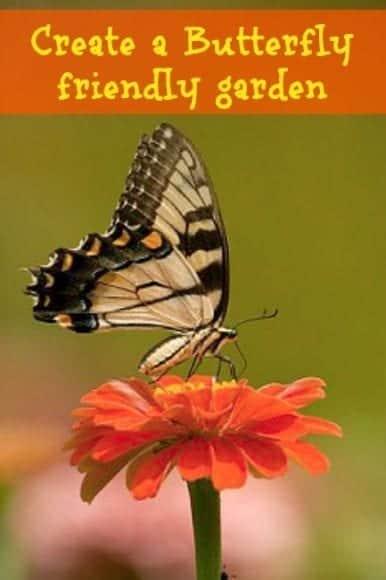 Create a butterfly friendly garden