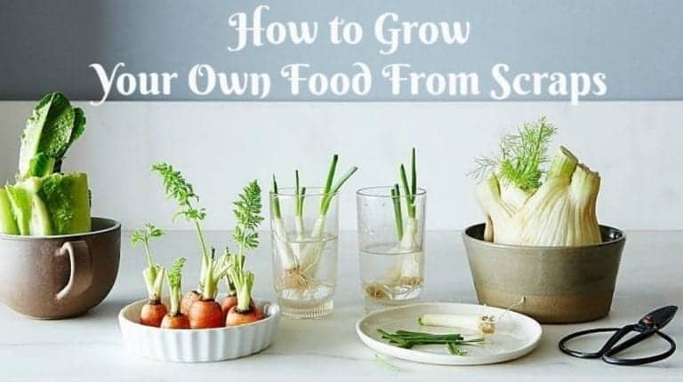 Grow Your Own Food From Scraps #HowTo - RedHeaded Patti Growing Vegetables From Scraps
