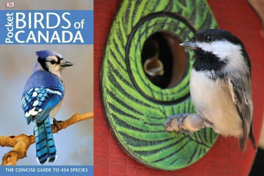 We Know Who's In The Birdhouse Thanks To @DKCanada #Review