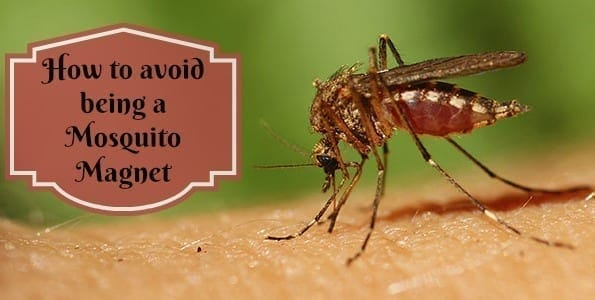 How to avoid being a Mosquito Magnet