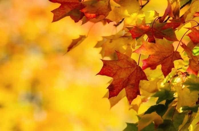 Be On The Defensive: How To Tackle Your Fall Allergies